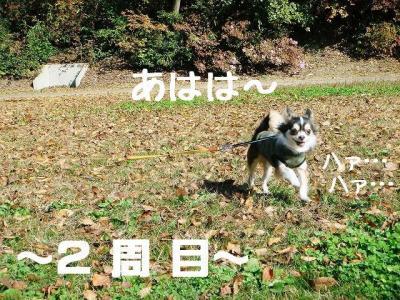 DSC608867.jpg