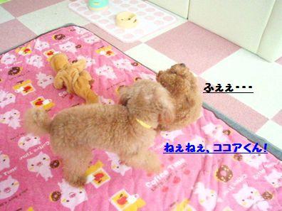PB062573.jpg