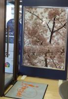 sakura_20120228134212.jpg