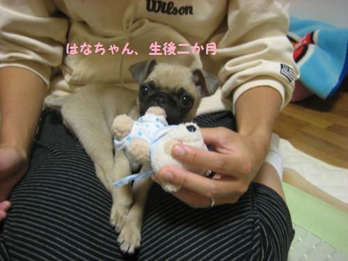 花赤ちゃん