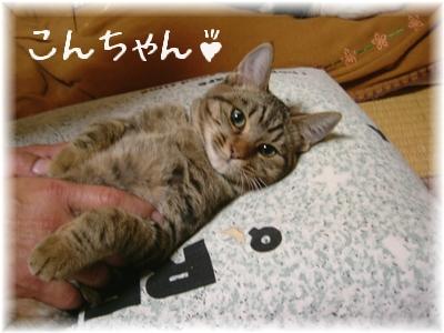 明けまして~こんちゃん1