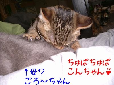 明けまして~こんちゃん3