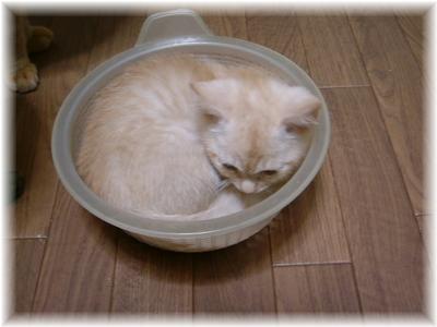 ザル猫~♪