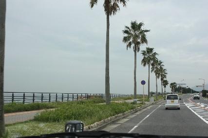 淡路島椰子の木海岸線