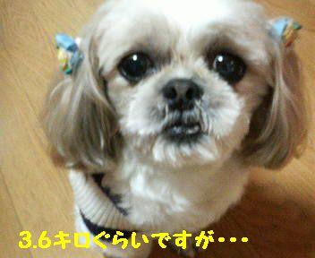 200802061937001.jpg