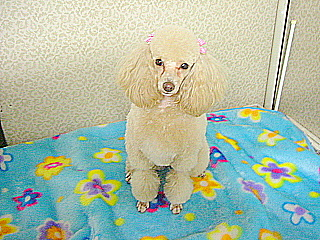 子犬パート3 043-1