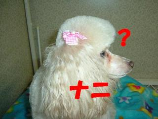 子犬パート3 038