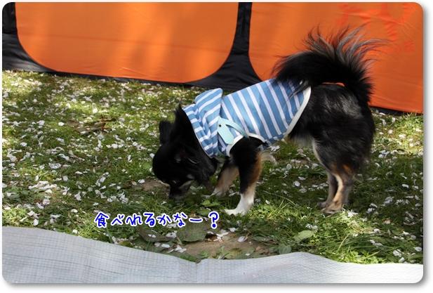 033_20110415180733.jpg