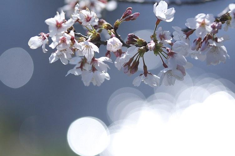 春うららか 2