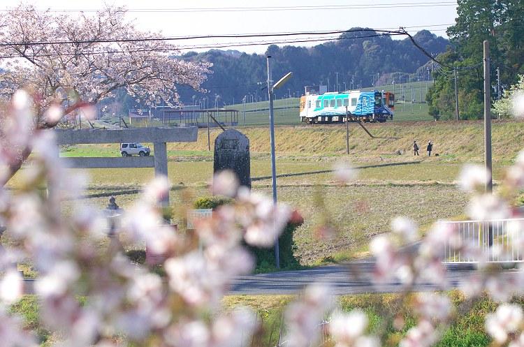 天浜線 桜風景