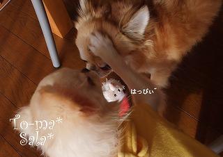 2011-12-25-17.jpg