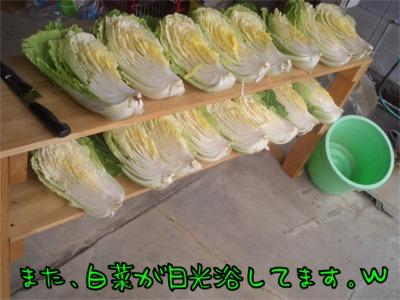 07.12.21.2白菜