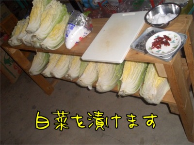 07.12.21.4.白菜