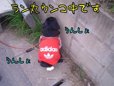 07.12.27.4うんこ
