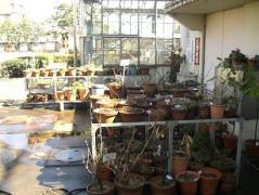 枯れた植物1