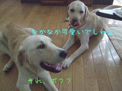 DSCF4026_20110730130559.jpg