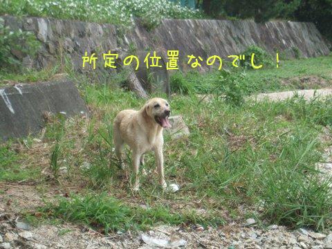DSCF4041_20110802105804.jpg