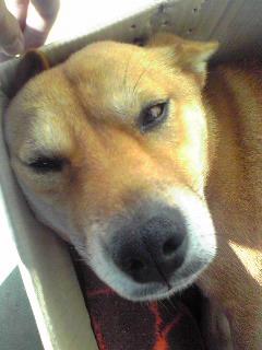mizumo犬