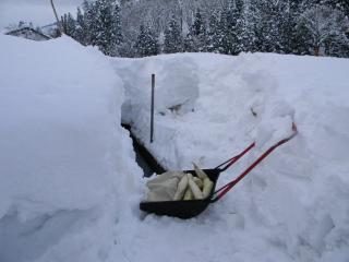 雪むろ大根