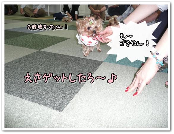 ティーちゃん (2)