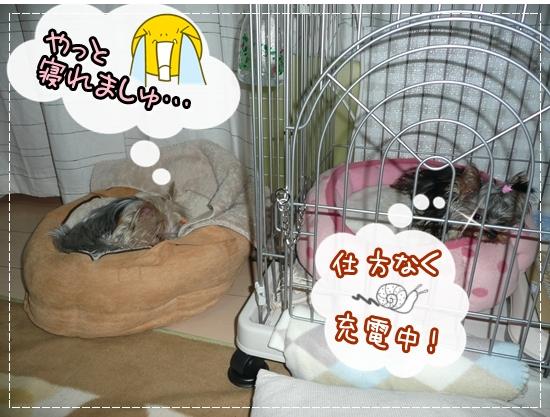 あずモコ寝1