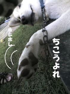 20070810075523.jpg