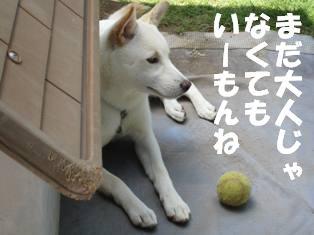IMG_0334.jpg
