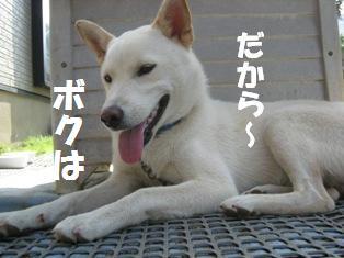 IMG_0563_1.jpg
