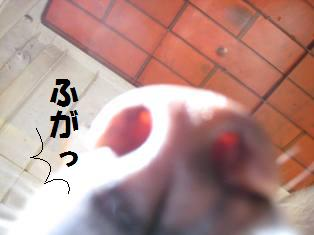 IMG_1461.jpg