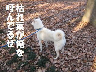 IMG_1488.jpg