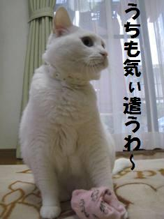 IMG_1544.jpg