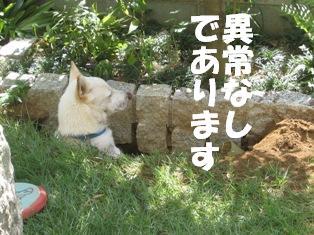ijyonashi.jpg
