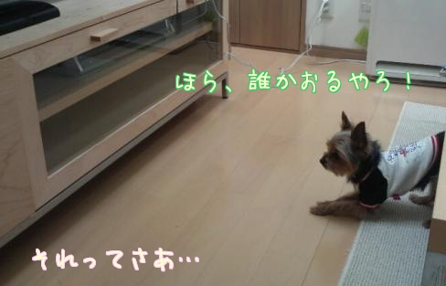 20110312①