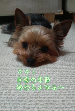 20110419②