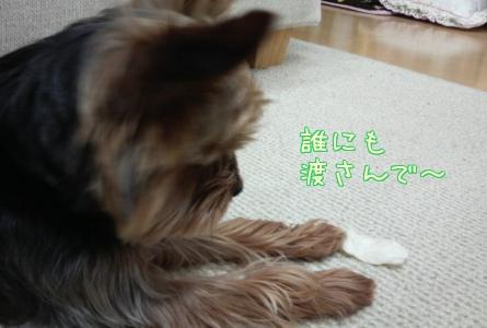 20110430②