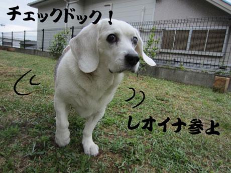 1_20110527181601.jpg