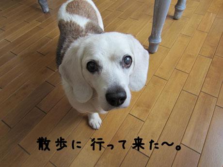 1_20110530143645.jpg