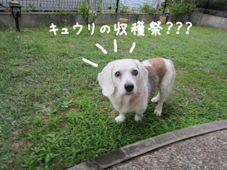1_20110626184029.jpg