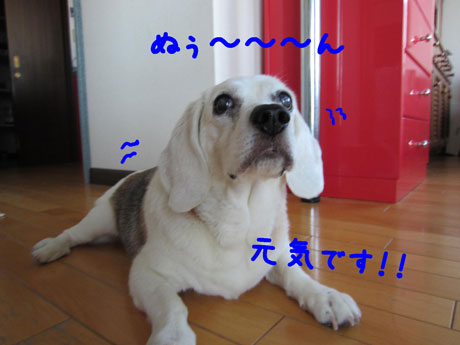 1_20110630104119.jpg