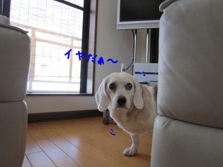 1_20110710160947.jpg