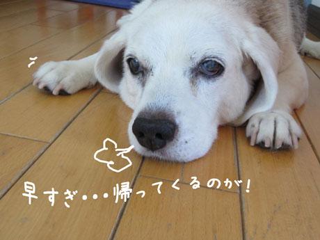 1_20110716163230.jpg