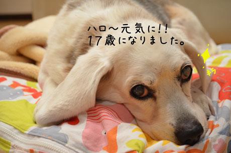 1_20120105193720.jpg