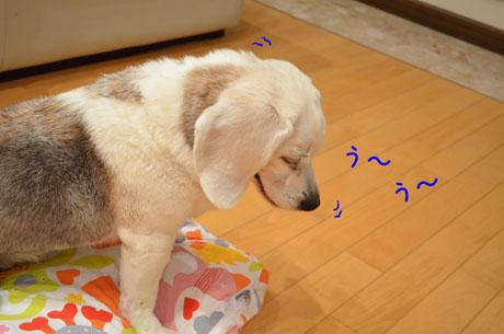 1_20120108141108.jpg