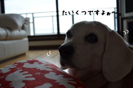 2_20110522132033.jpg