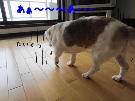 2_20110529121419.jpg