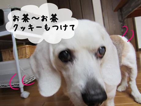 2_20110530143645.jpg