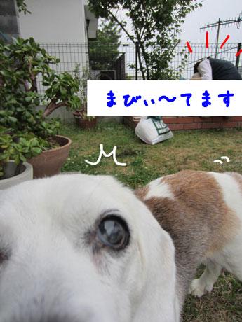 2_20110605174405.jpg
