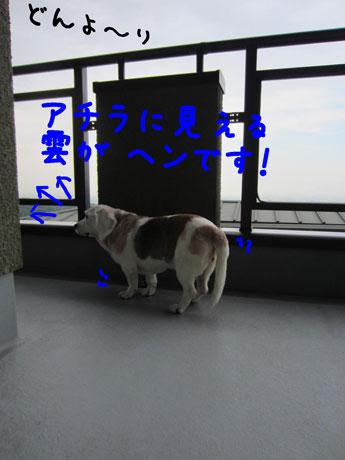 2_20110608151127.jpg