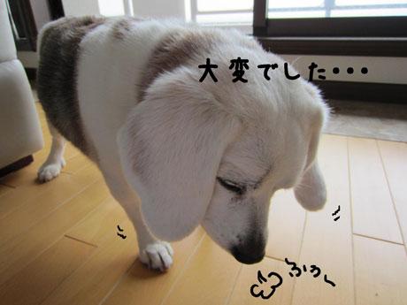 2_20110609145130.jpg