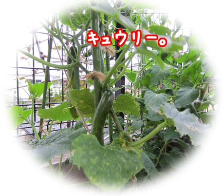 2_20110626184029.jpg